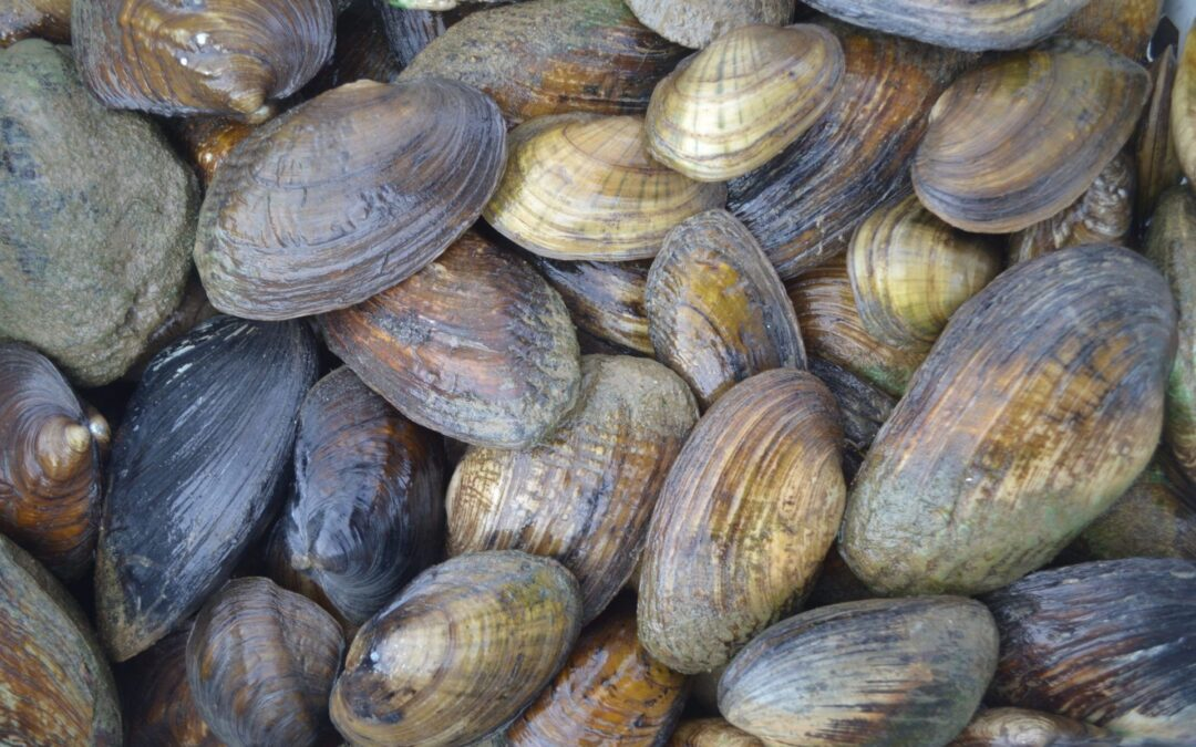 Schools selected for nation's first Mussels in the Classroom program