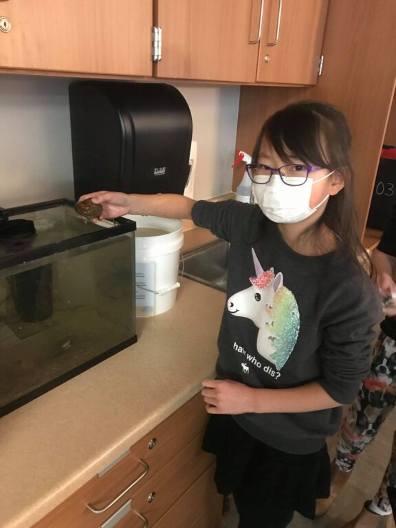 A student holds a freshwater mussel above a fish tank.