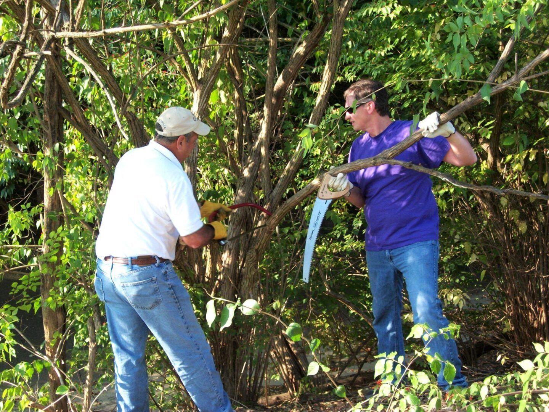 Two Volunteers Removing Invasive Species Honeysuckle