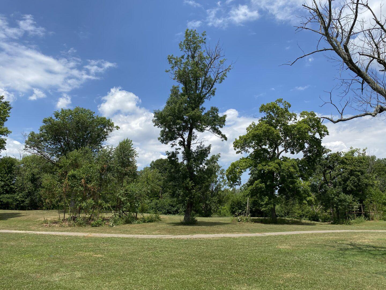 Kingswood Park habitat restoration
